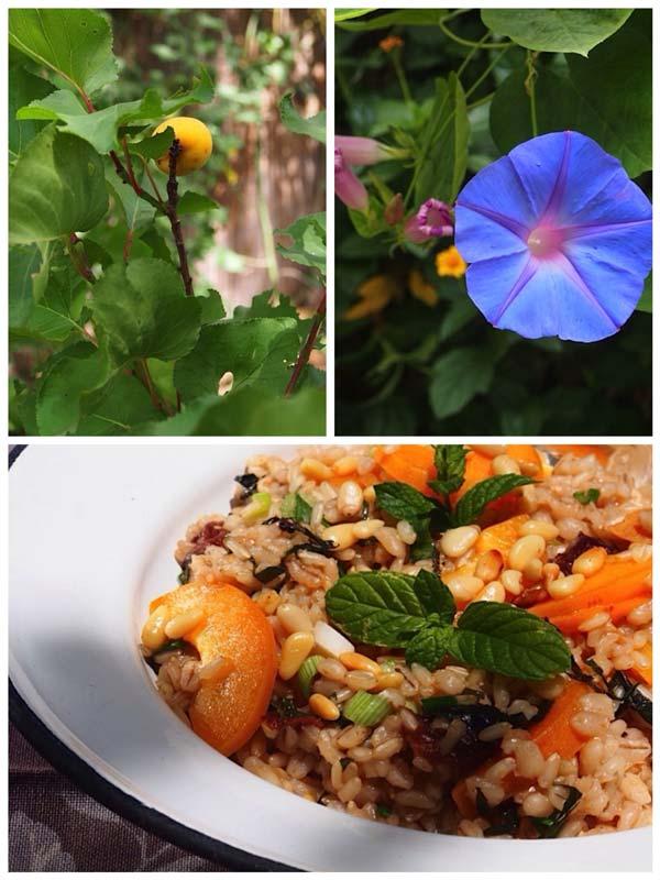אורז מלא, גריסי פנינה ומשמש עם רוטב יוגורט/ מקדמיה